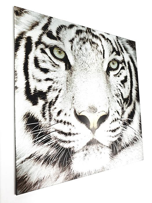 Eloxaldruck auf Aluminium Motiv: Tiger