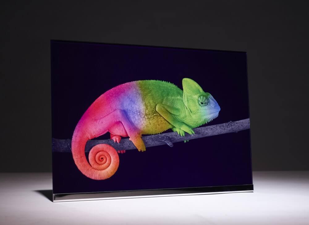 Wandbild aus Glas Motiv Chameleon