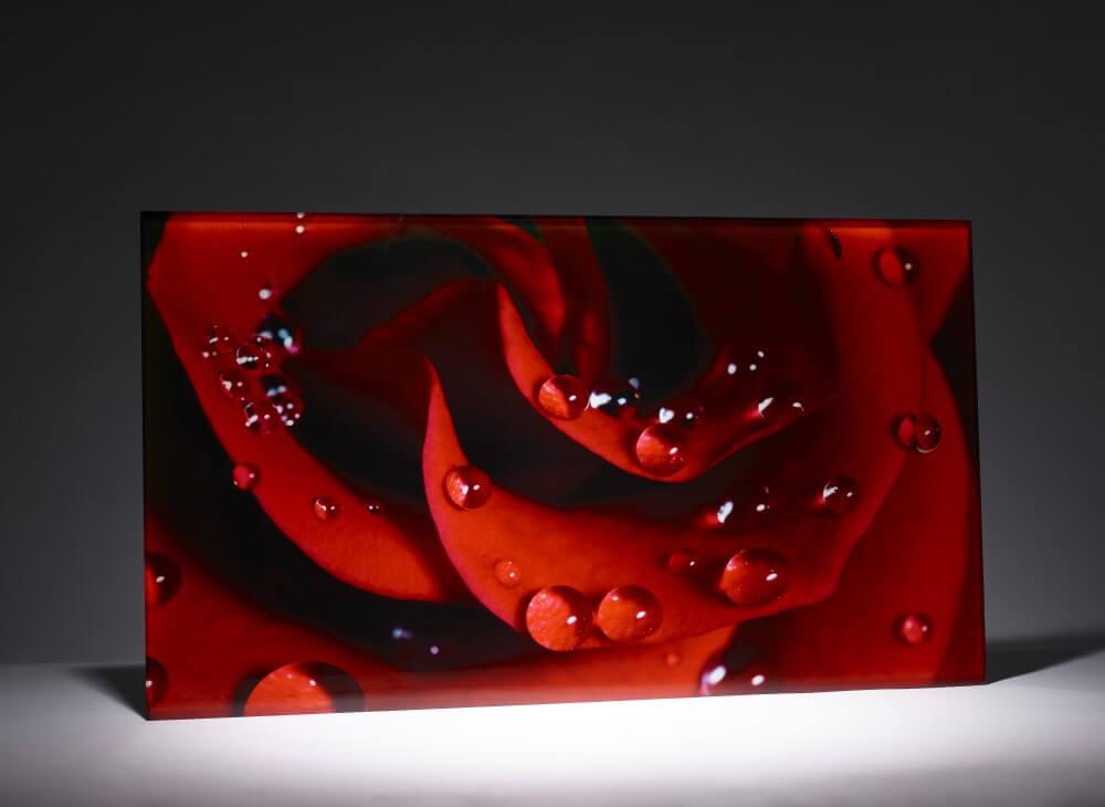Wandbild aus Glas Motiv Rose